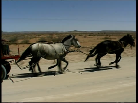 vídeos de stock e filmes b-roll de ms track right, native men driving horses and cart, namibia - animal de trabalho