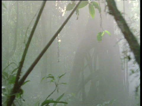 stockvideo's en b-roll-footage met track right through misty forest - plant attribute