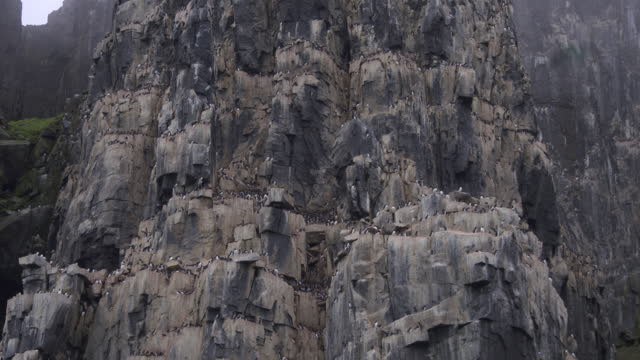 la track round auk and guillemot nesting cliffs with birds in flight - auk stock videos & royalty-free footage