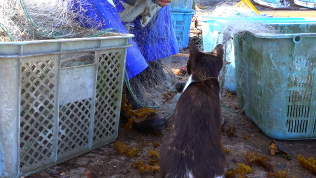 stockvideo's en b-roll-footage met track round group of feral domestic cats watching fisherman clearing nets on dockside - kleine groep dieren