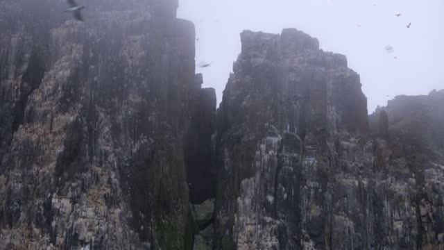 la track round misty auk and guillemot nesting cliffs with birds in flight - auk stock videos & royalty-free footage