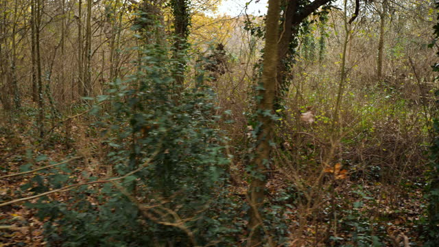 pov track shot through woodland in autumn - bare tree stock videos & royalty-free footage