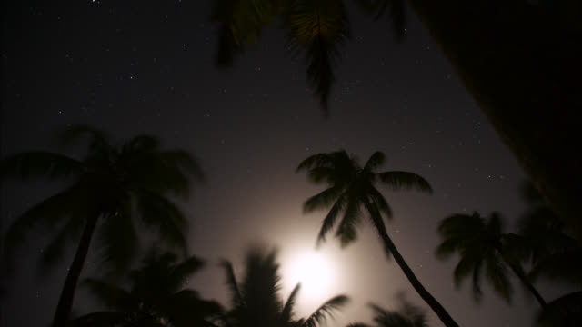 tl track through coconut palms at night - coconut palm tree stock videos & royalty-free footage