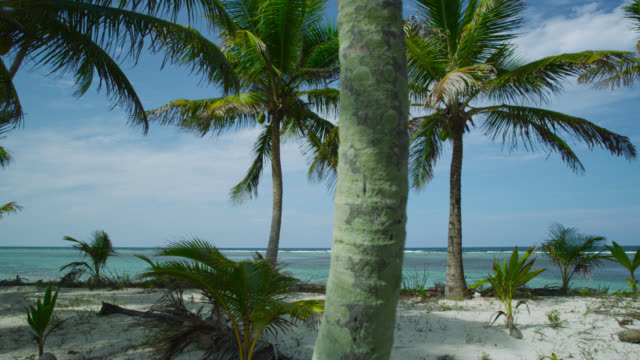 track through coconut palms - clima tropicale video stock e b–roll