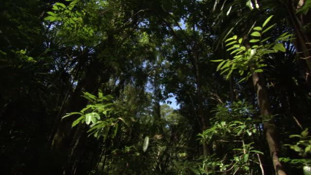Track through foliage in dense rainforest, Madagascar
