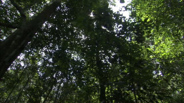 track through forest, central african republic - copertura di alberi video stock e b–roll