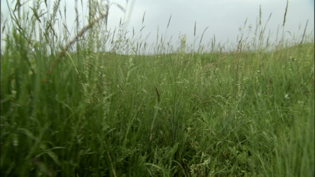 Track through grass as grasshoppers jump around, Xanadu, Xinjiang Province, China