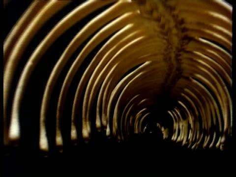 CU Track through inside of snake skeleton, Studio