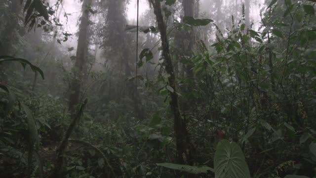 track through moist cloud forest, ecuador - ecuador stock videos and b-roll footage