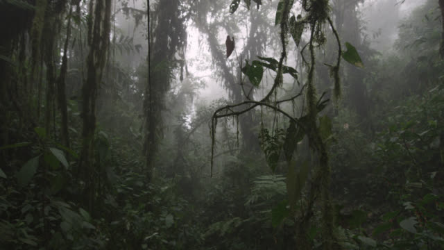 vídeos de stock e filmes b-roll de track through moist cloud forest, ecuador - árvore tropical