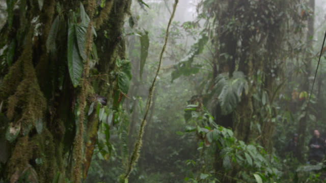 track through moist cloud forest, ecuador - moss stock videos & royalty-free footage
