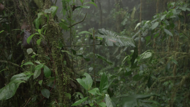 track through moist cloud forest, ecuador - lush video stock e b–roll