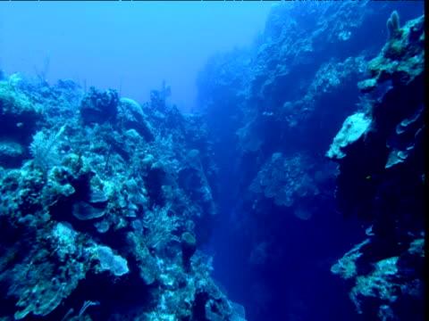 Track through narrow canyon between corals, Cayman Islands