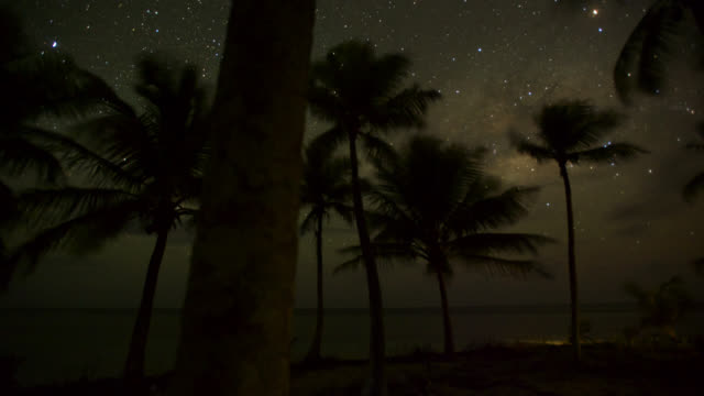 tl track through palms at night - palm tree stock videos & royalty-free footage