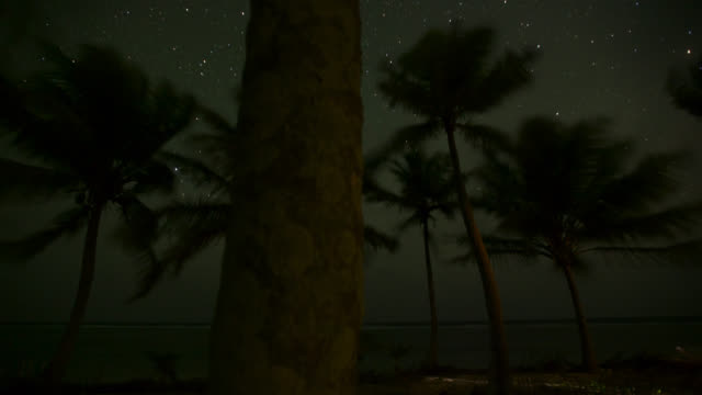 tl track through palms at night - coconut palm tree stock videos & royalty-free footage
