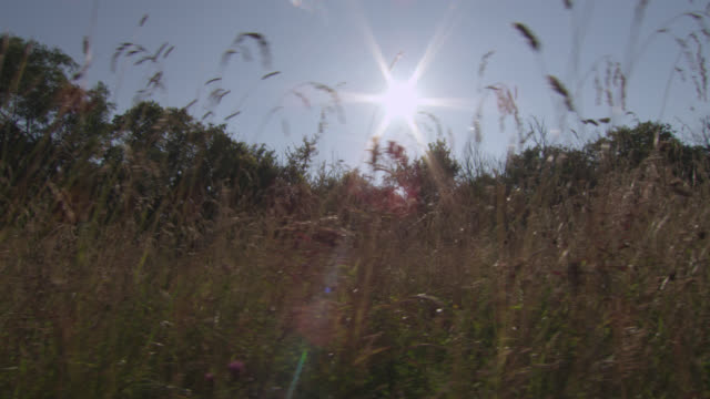 track through summer hay meadow, essex, england - bbc stock videos and b-roll footage