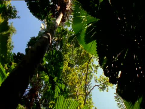 vídeos y material grabado en eventos de stock de track under fan palms in rainforest, daintree, australia - fan palm tree
