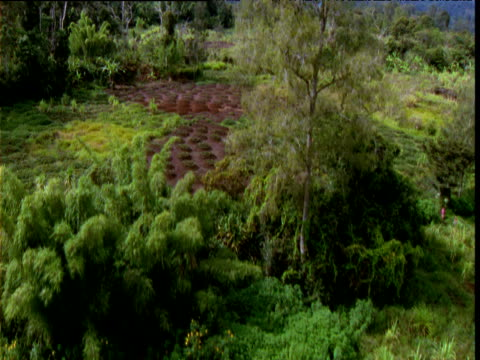 track up over farming plots, papua new guinea - holprig stock-videos und b-roll-filmmaterial