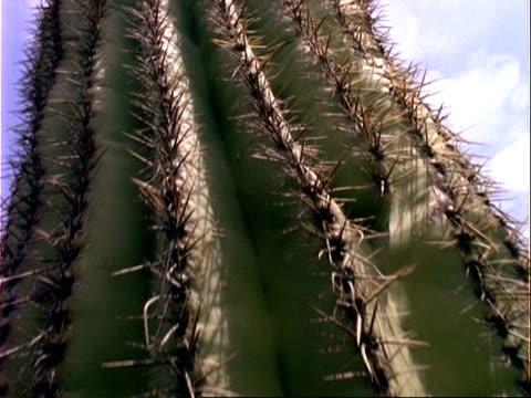bcu track up saguaro cactus, usa - saguaro cactus stock videos & royalty-free footage