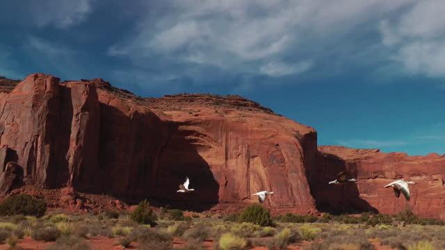 vídeos y material grabado en eventos de stock de track with 4 snow geese flying low in monument valley - grupo pequeño de animales