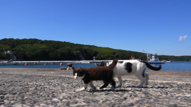vídeos y material grabado en eventos de stock de track with feral domestic cat and kitten walking across dockside and looking around - colonia grupo de animales