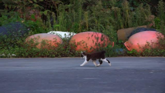 stockvideo's en b-roll-footage met track with feral domestic cat and kittens walking along road - kleine groep dieren
