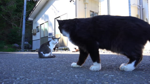 vídeos de stock, filmes e b-roll de track with feral domestic cat chasing second cat on dockside - grupo médio de animais