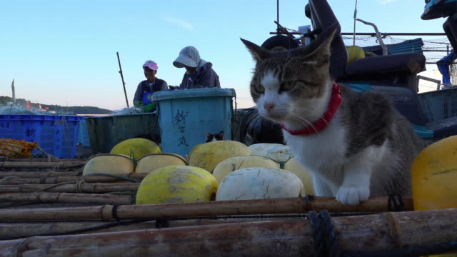 vídeos de stock, filmes e b-roll de track with feral domestic cat climbing over floats to fisherman cleaning nets - domestic animals