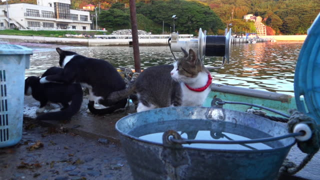 vídeos de stock, filmes e b-roll de track with feral domestic cat climbing up fish boxes to fisherman cleaning nets - grupo mediano de animales