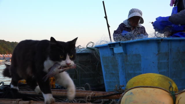 track with feral domestic cat walking across dockside with fish in its mouth - buoy stock videos & royalty-free footage
