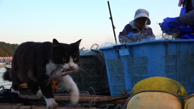 vídeos de stock, filmes e b-roll de track with feral domestic cat walking across dockside with fish in its mouth - boia equipamento marítimo de segurança