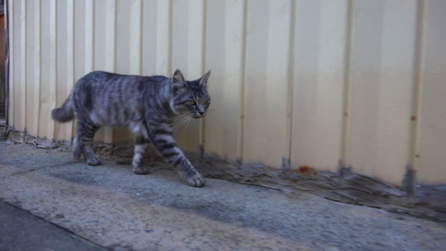 track with feral domestic cat walking in road by building in fishing port - 一匹点の映像素材/bロール