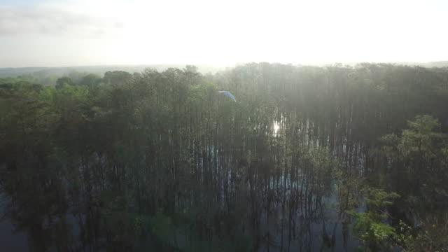 Tracking a bird flying in swamp bayou beautiful - Drone Aerial 4K Everglades, Swamp bayou with wildlife alligator nesting Ibis, Anhinga, Cormorant, Snowy Egret, Spoonbill, Blue Heron, eagle, hawk, cypress tree 4K Nature/Wildlife/Weather