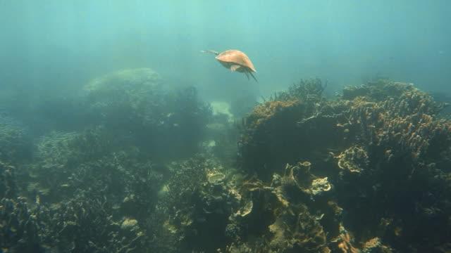 vídeos de stock, filmes e b-roll de tracking a sea turtle in the sea - organismo aquático