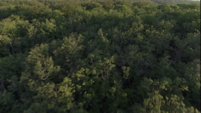 Tracking aerial over a deciduous forest. Available in HD.