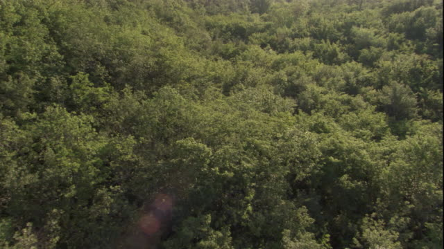 tracking aerial over a vast deciduous forest. available in hd. - deciduous stock videos & royalty-free footage