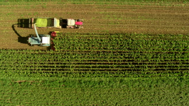 stockvideo's en b-roll-footage met hd: tracking aerial shot of harvesting corn - oogsten