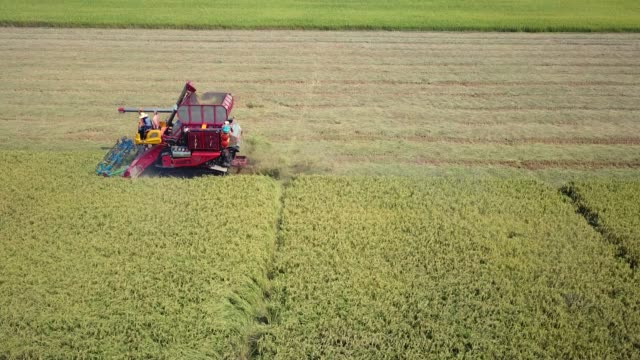 vídeos de stock e filmes b-roll de tracking aerial shot of harvesting corn - agricultura