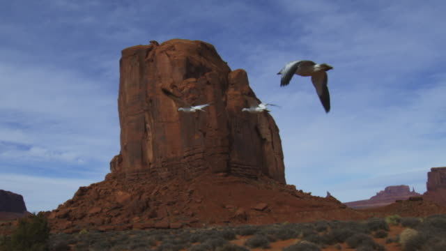 tracking alongside 2 snow geese flying low through monument valley reveal rest of family as they fly from camera - monument valley stock videos & royalty-free footage