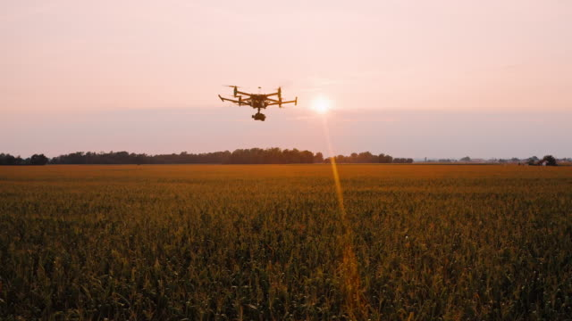 vídeos de stock e filmes b-roll de aerial tracking flying over fields of corn at sunset - casa de quinta