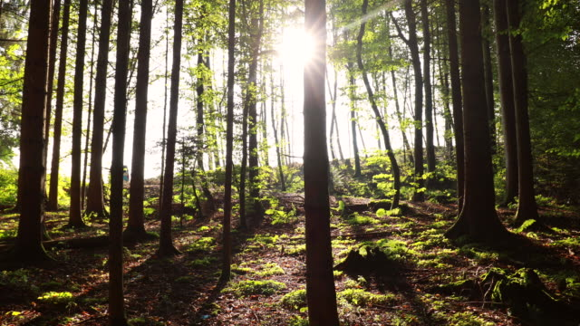pov tracking in, sun shining through trees in forest - boden stock-videos und b-roll-filmmaterial