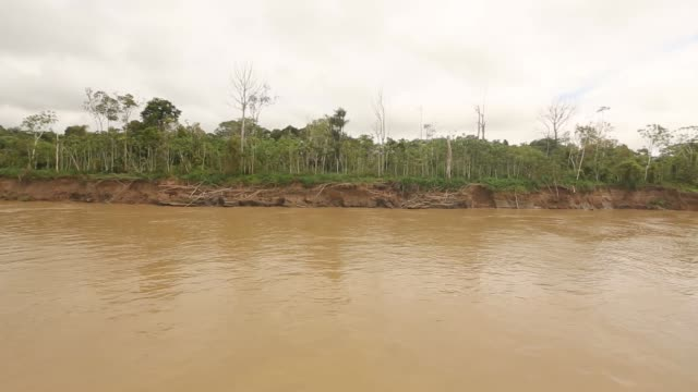 vídeos de stock, filmes e b-roll de tracking long shot amazon rainforest view from riverboat a transport riverboat travels in the brazilian amazon from maues to manaus on november 27... - amazonas state brazil