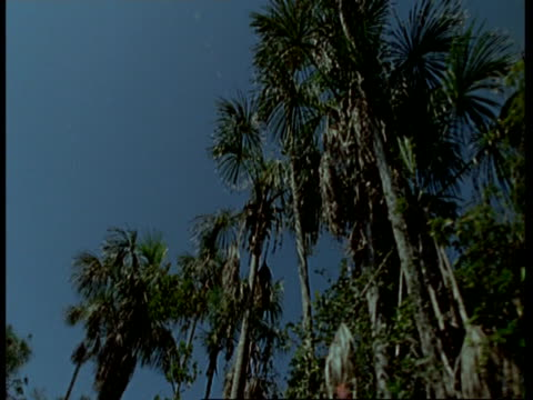 vidéos et rushes de ms tracking low angle view of trees against blue sky, south america - low angle view