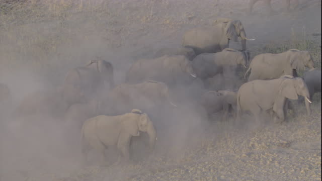 tracking over a herd of elephants on a dusty plain, botswana. available in hd. - herd stock videos & royalty-free footage