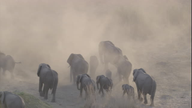 vídeos y material grabado en eventos de stock de tracking over a herd of elephants on a dusty plain, botswana. available in hd. - elefante
