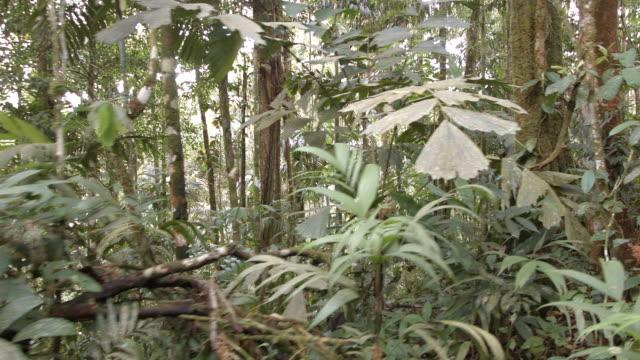 Tracking past tropical rainforest vegetation