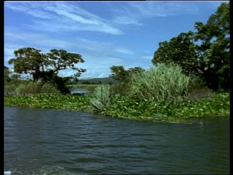 mwa tracking right along river, past trees and water plants, india - ヒヤシンス点の映像素材/bロール