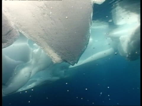 ms tracking right, underwater shot of ice, antarctica - iceberg ice formation stock videos & royalty-free footage