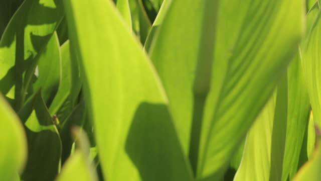 Tracking shot across green vegetation.