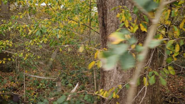 tracking shot along dense autumn woodland - tree trunk stock videos & royalty-free footage